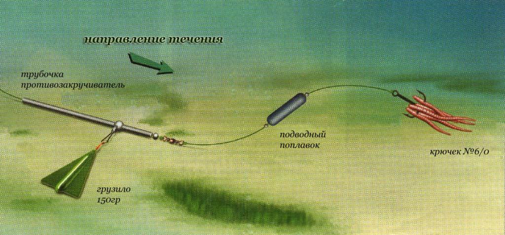 В какое время ловить сома на донку с берега