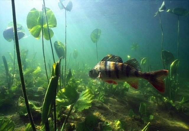 Ловля рыбы на резинку