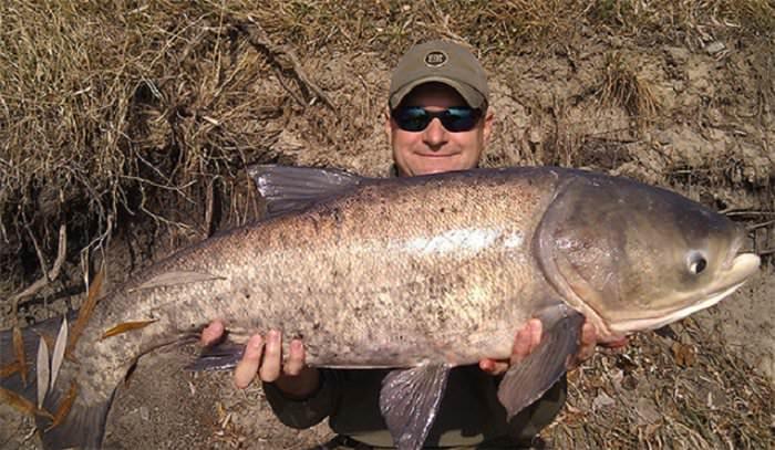 где ловить толстолобика в игре реальная рыбалка