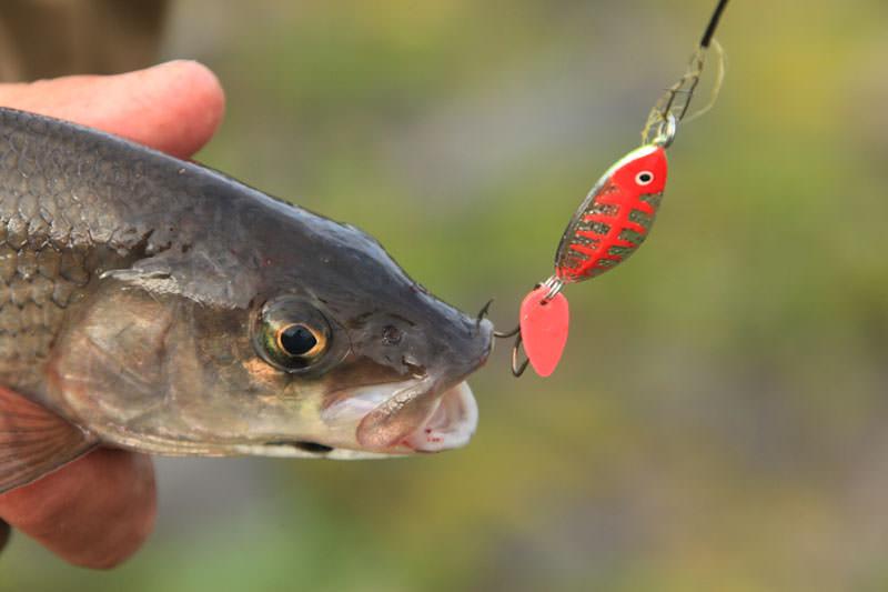 рыболовные приманки хариус