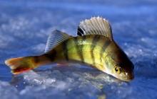 Когда клюет рыба — условия для лучшего клева