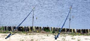 Донки на берегу