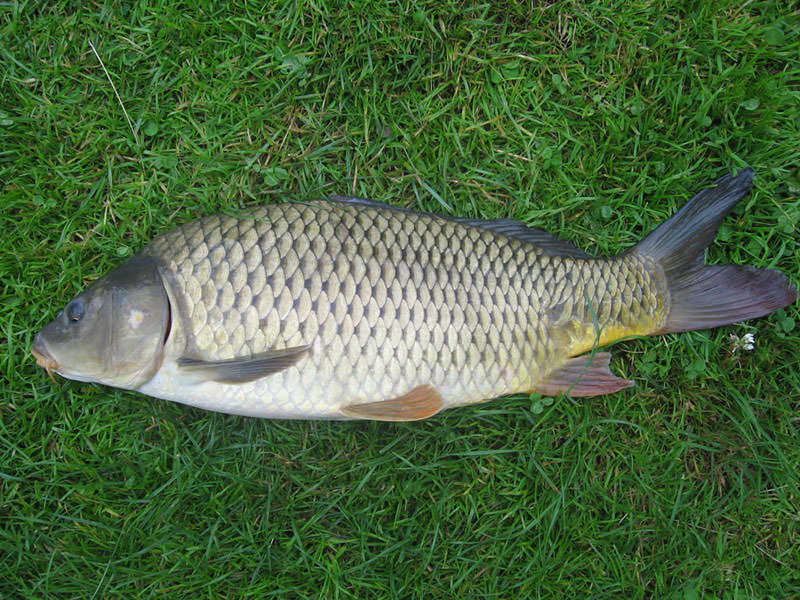 какая рыба клюет в конце июня