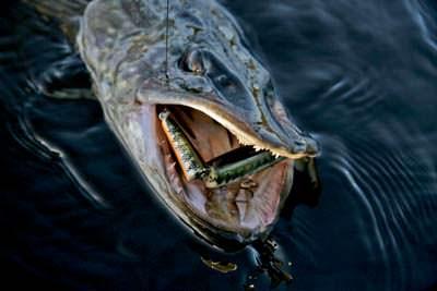 при каком ветре рыба не клюет летом