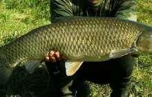 Мужчина держит больную рыбу