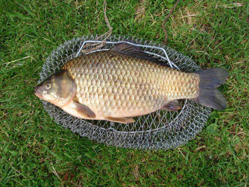Наживка для ловли карася - статьи о приманках. наживках — всё о рыбалке