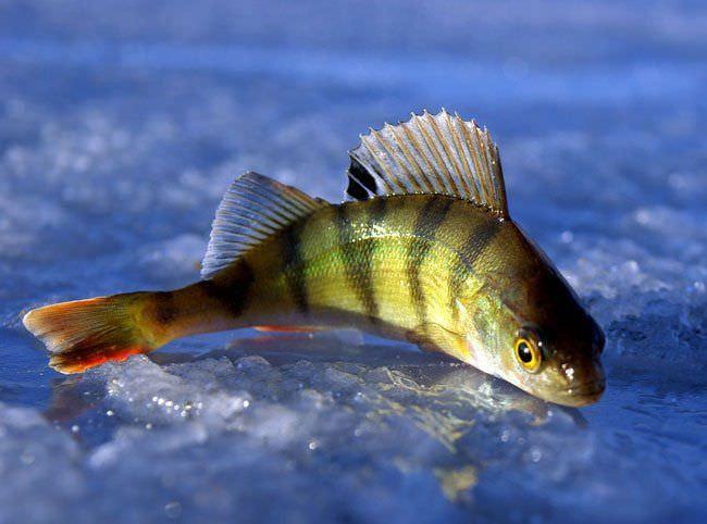 На что хорошо клюет рыба