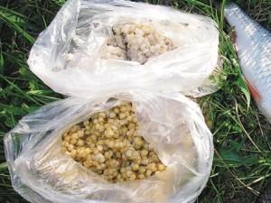Пшеница в пакетах