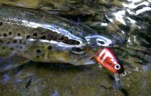Рыба форель