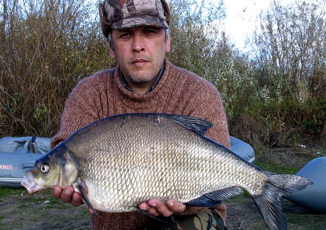 Рыба лещ