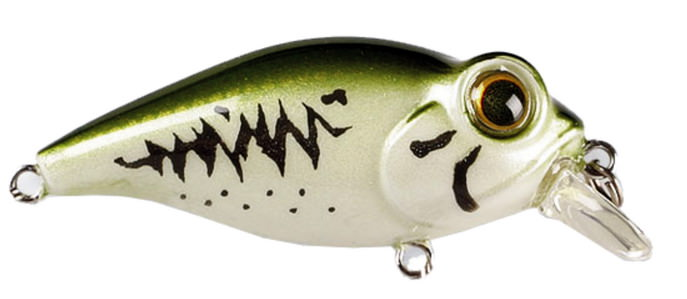 C'ultiva Bug Eye Bait Owner