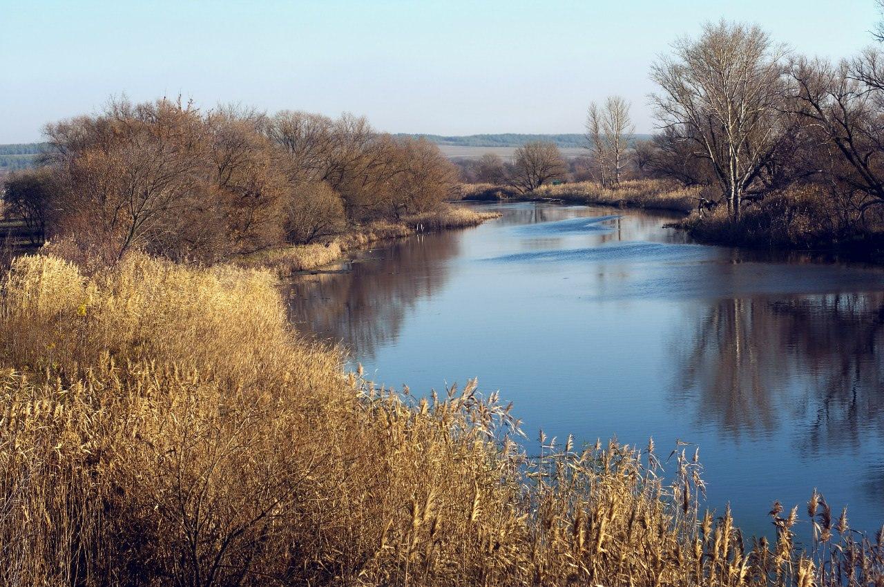 Тихая Сосна река